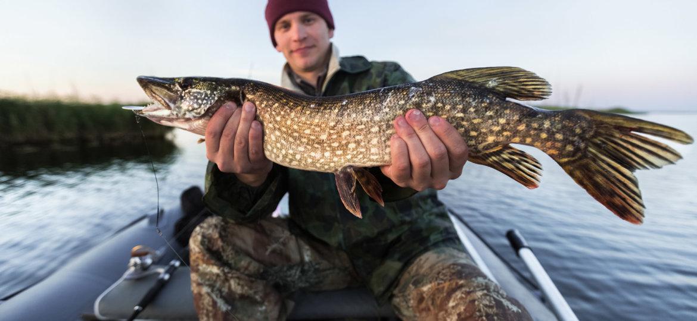 щука в руках рыбака